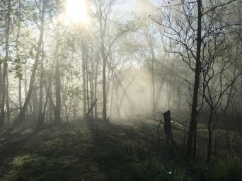 Foggy_Woods_IMG_2021