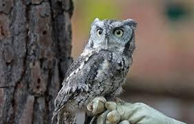 bird owl
